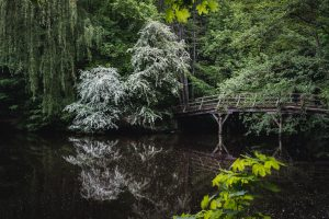 a wooden bridge in the city forest.